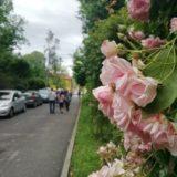 Roseto di San Giovanni, gli studenti EurHope 2019 in visita al parco di San Giovanni a Trieste